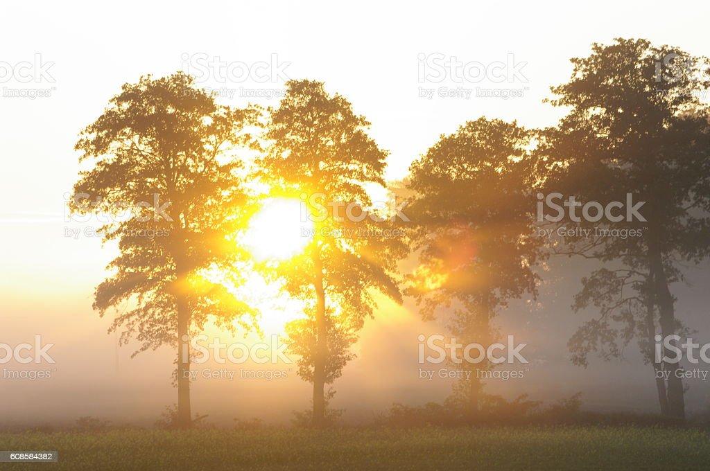 tree and sun stock photo