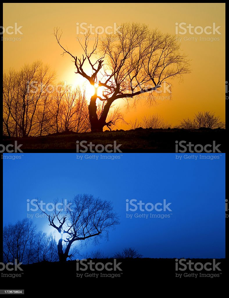 Tree and Sun Scenery Night an Day royalty-free stock photo