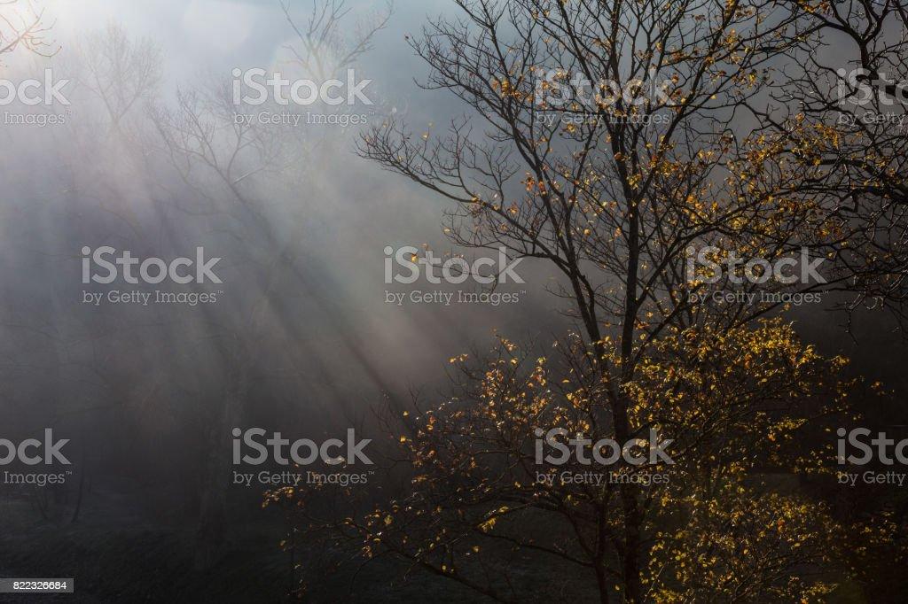 Tree and sunrays stock photo