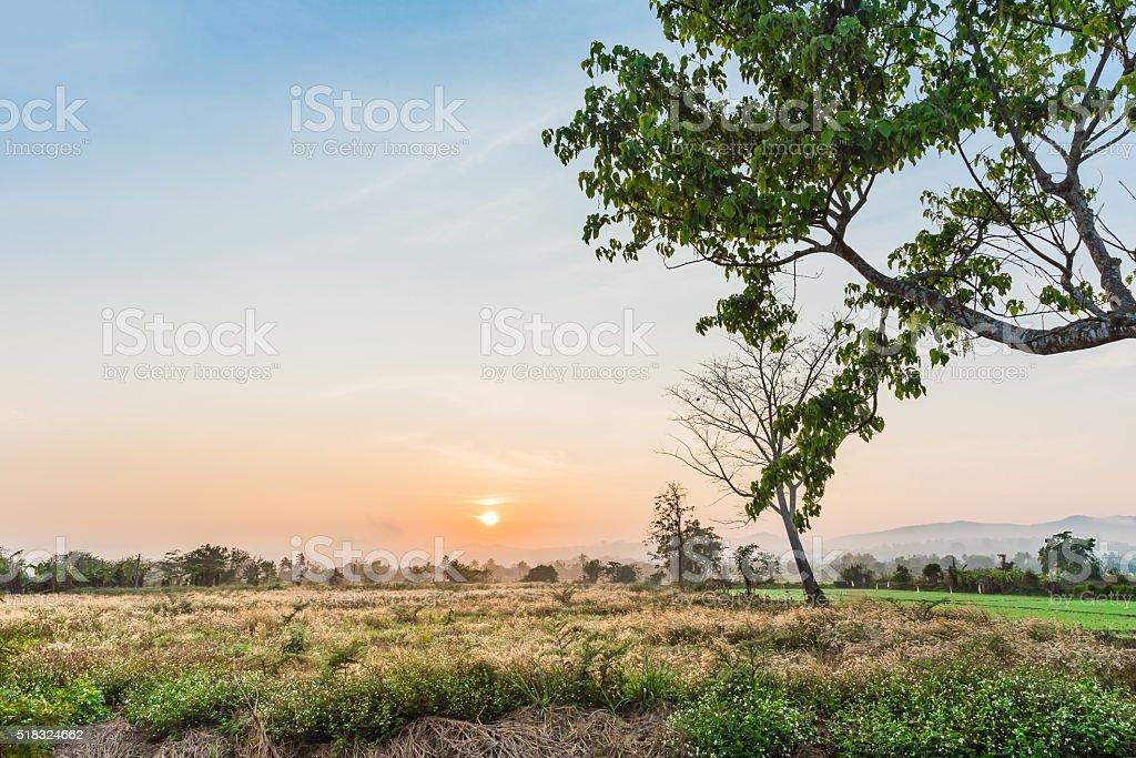 tree and sunset background stock photo