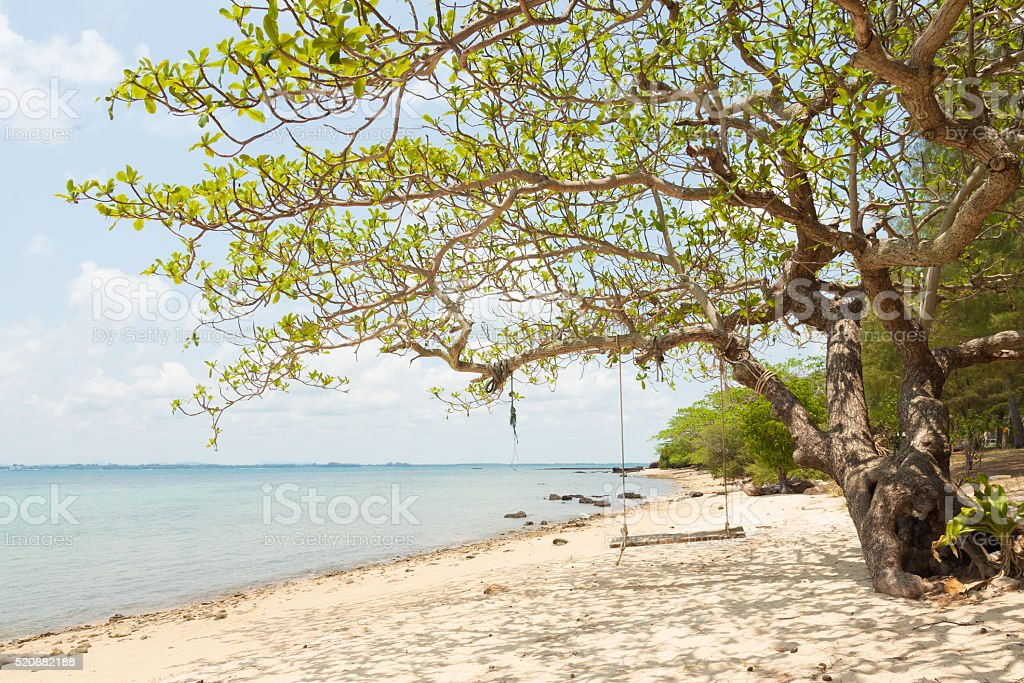 Tree and swing at seaside of island in thailand royalty-free stock photo
