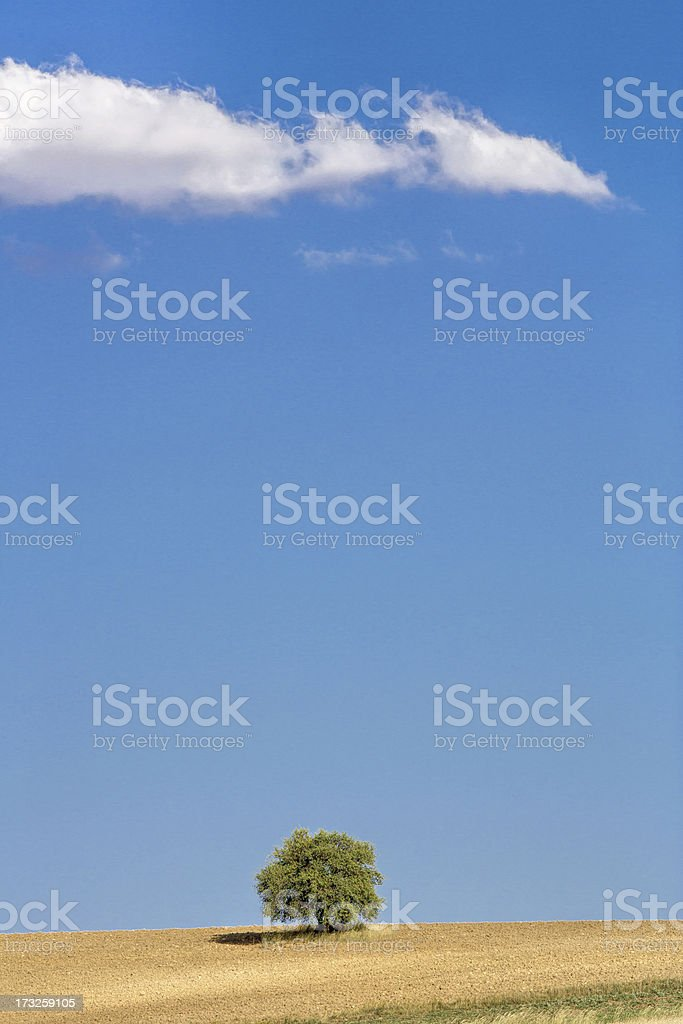 tree and unplowed area royalty-free stock photo