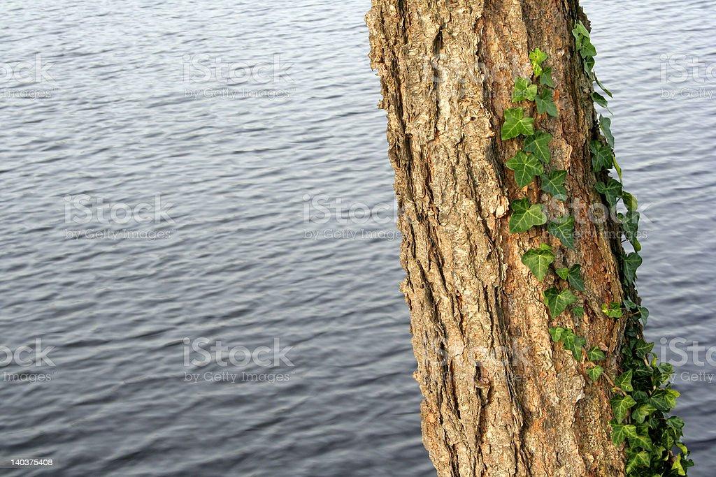 Drzewo i Vine zbiór zdjęć royalty-free