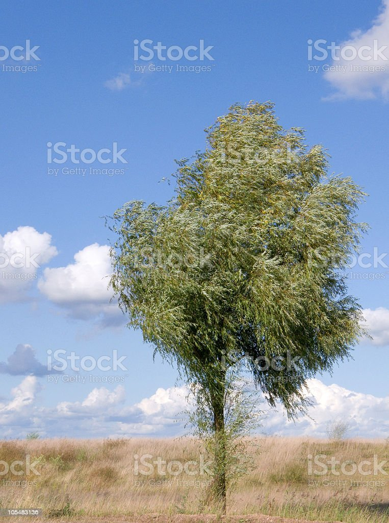 Tree and wind stock photo