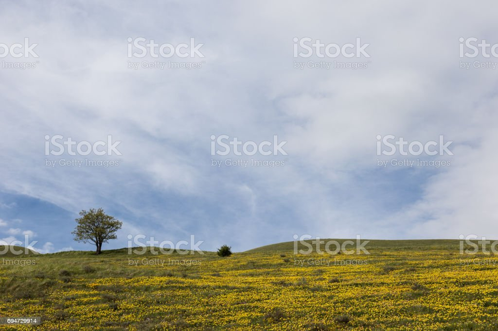 Tree and yellow flowers stock photo