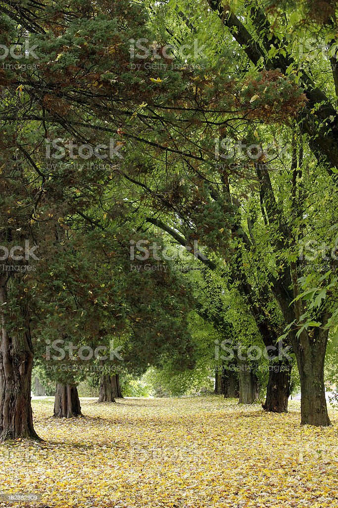 tree archway royalty-free stock photo