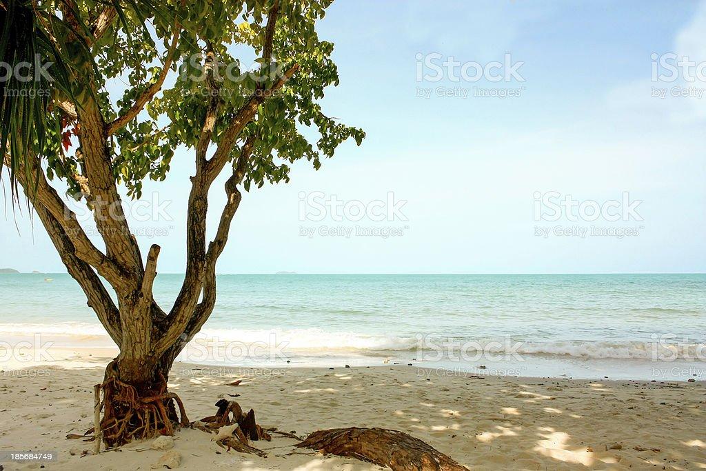 Tree at a beach stock photo