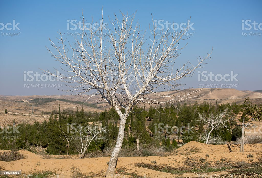 Tree at Automn, near Metar - northen Ber Sheva stock photo