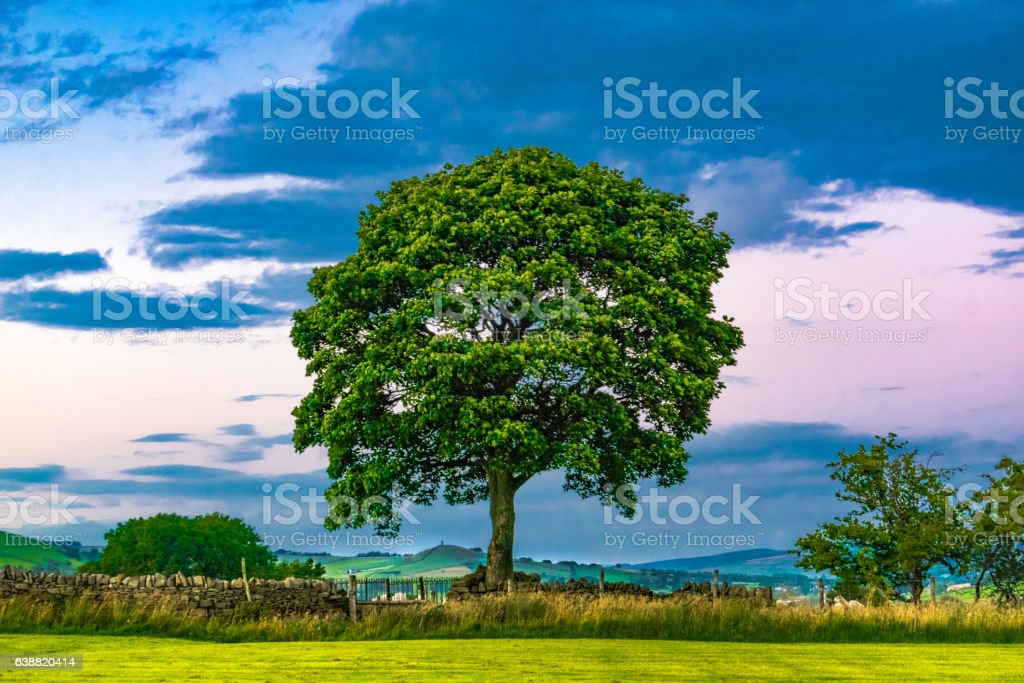 Tree At Dusk And Moody Sky stock photo