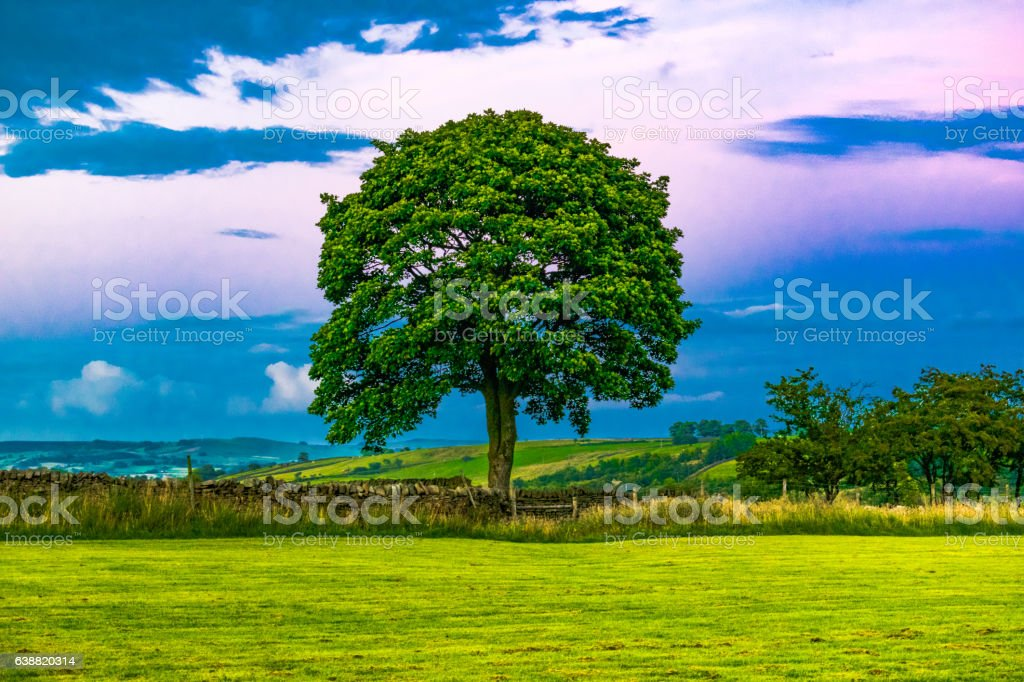 Tree At Dusk stock photo