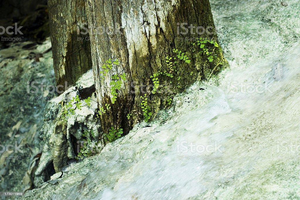 Tree at Erawan Falls stock photo
