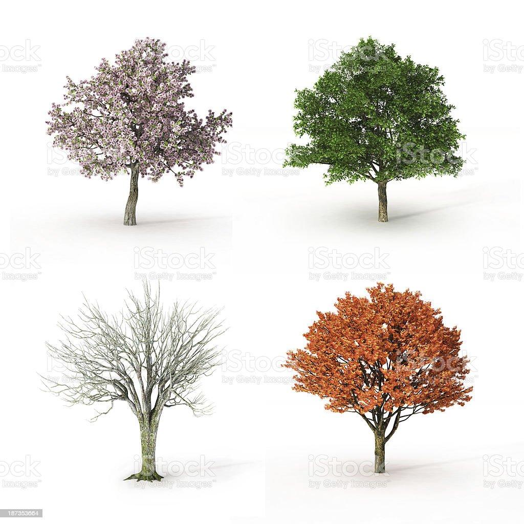 tree at four seasons royalty-free stock photo
