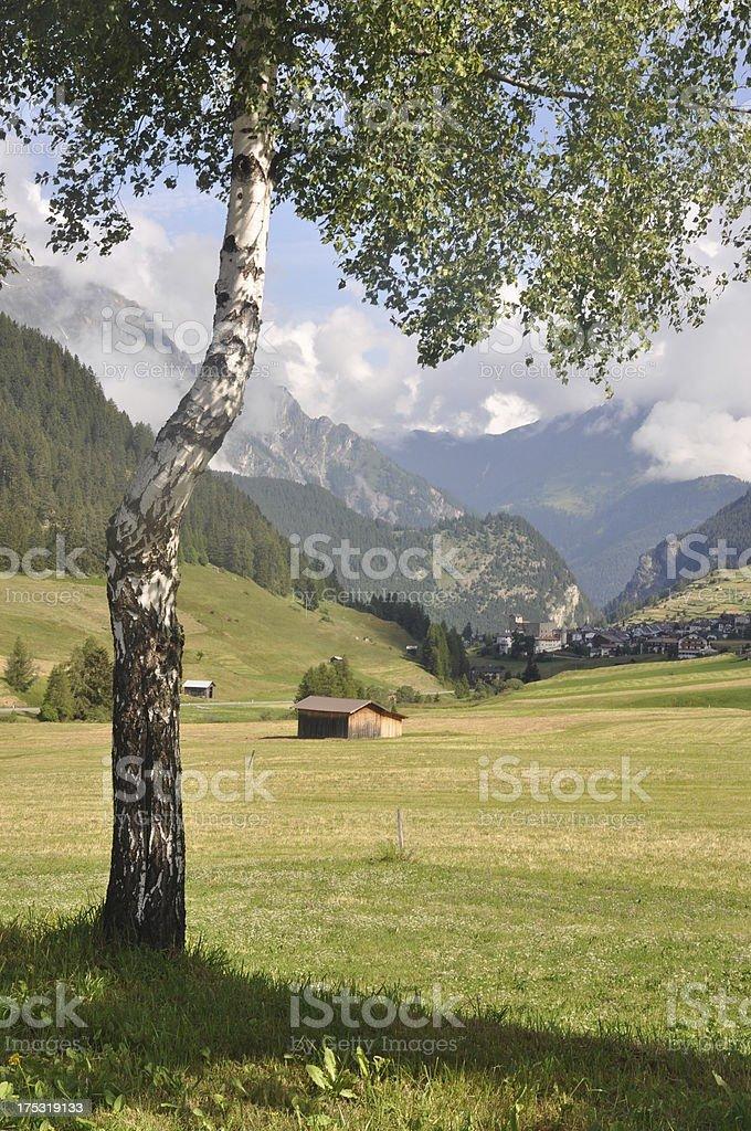 Tree at Nauders, Austria stock photo