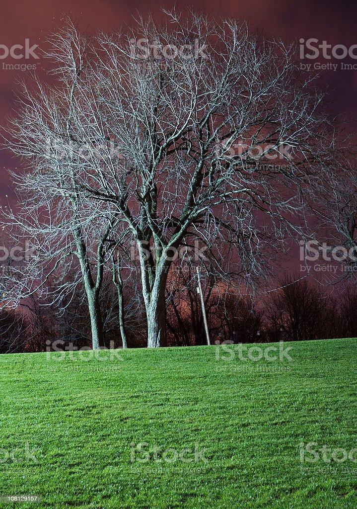 Tree at night stock photo