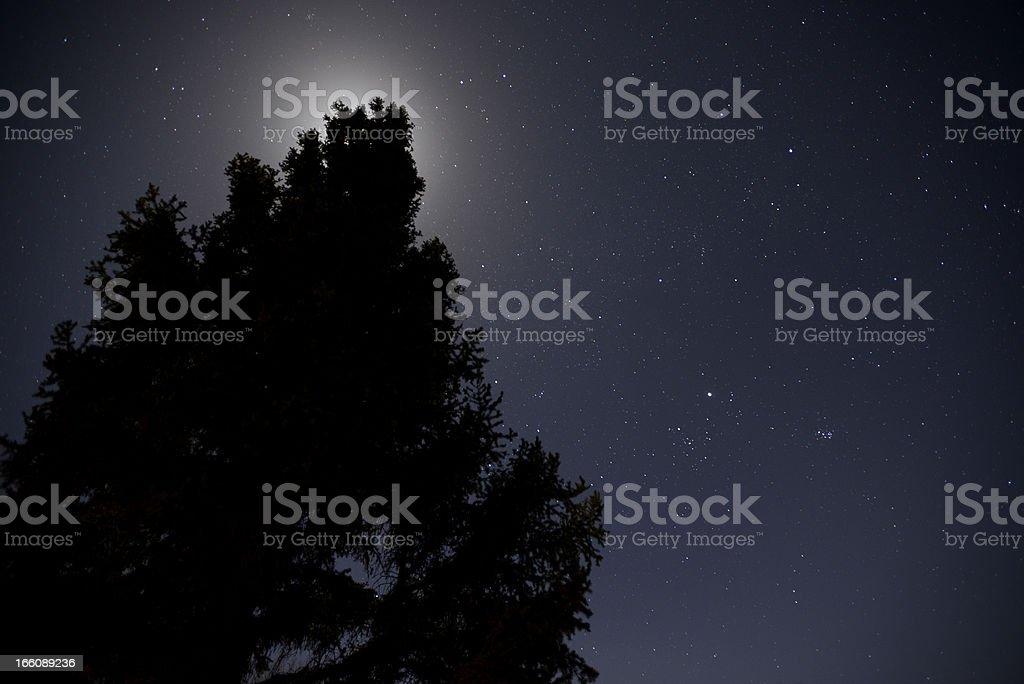 Tree at night with Stars royalty-free stock photo
