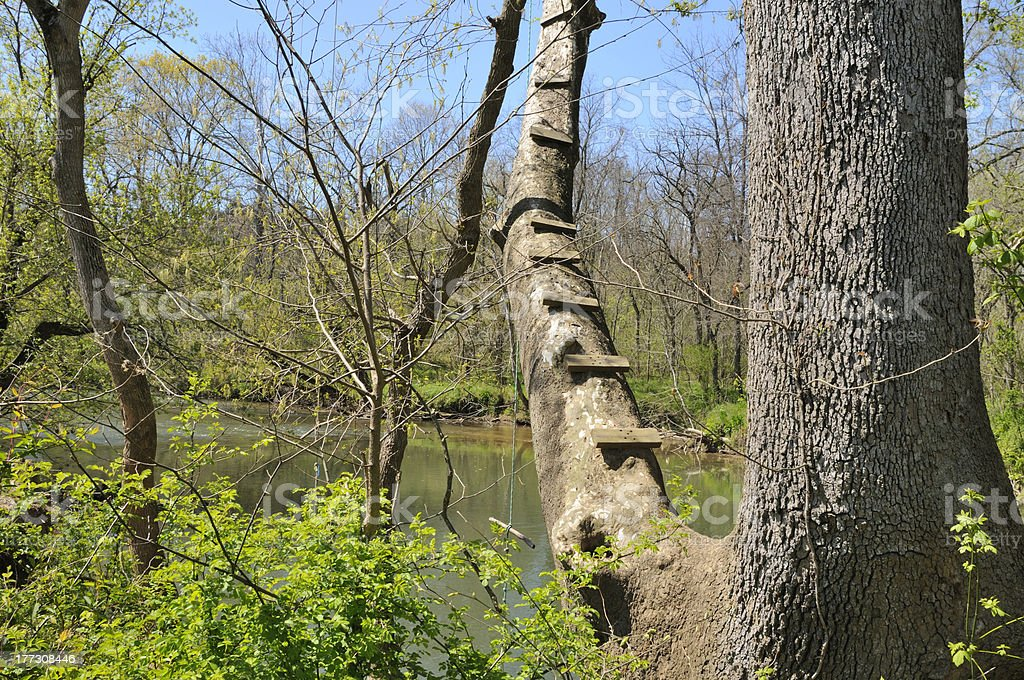 Tree at Old Swimming Hole royalty-free stock photo