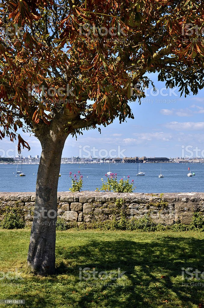 Tree at Port-Louis of Brittany in France stock photo