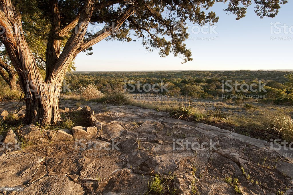 Tree at sunset in Texas hill country stock photo