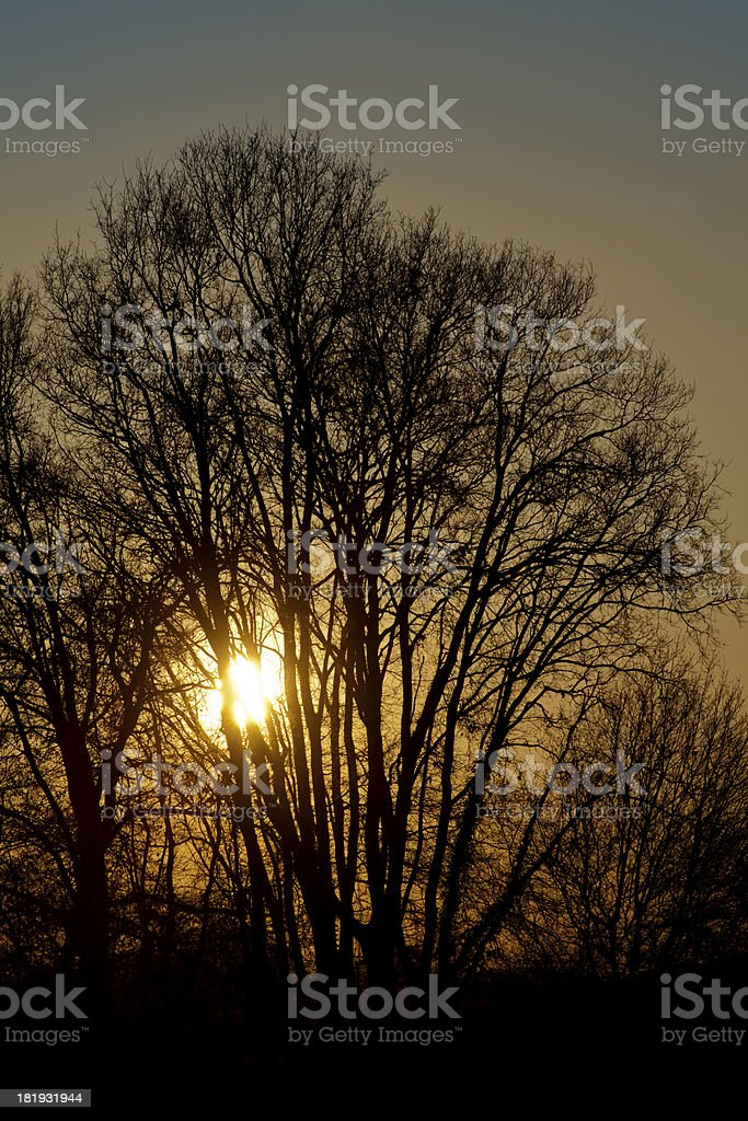 Tree at sunset. royalty-free stock photo