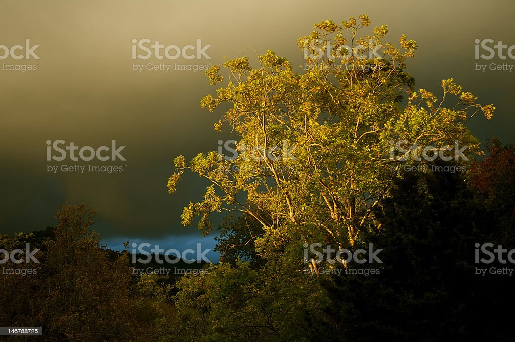 tree at sunset with dark clouds royalty-free stock photo