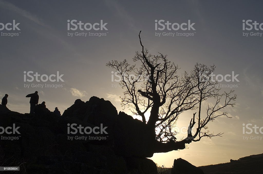 Tree at Sunset with people royalty-free stock photo