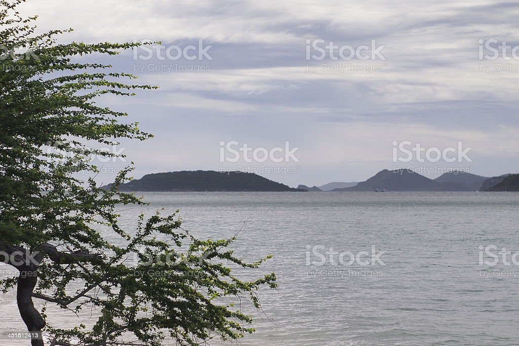 tree at the sea. stock photo