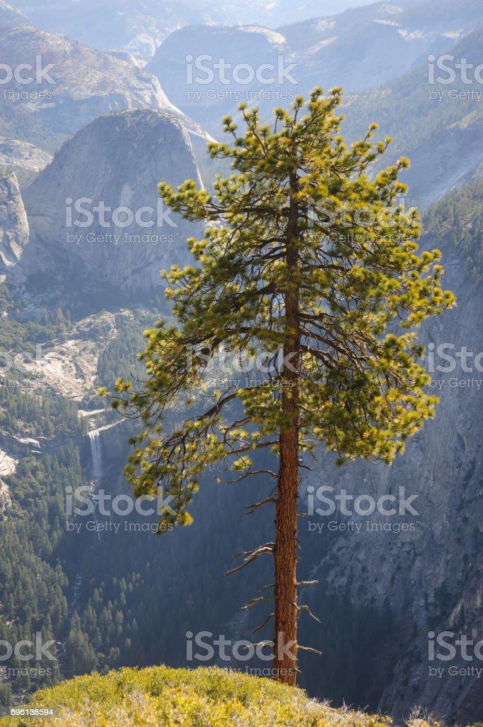 Tree at the Valley's Edge stock photo