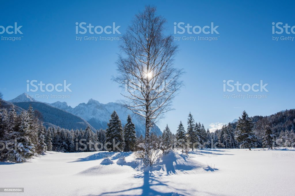 tree at winter with ice and snow stock photo