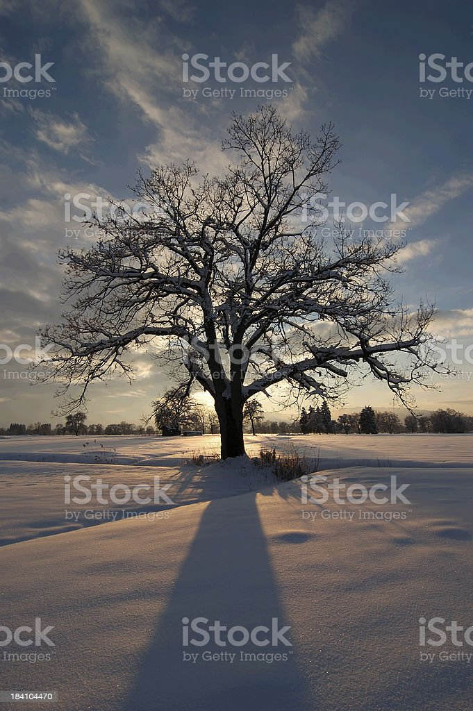 tree at winter-evening royalty-free stock photo