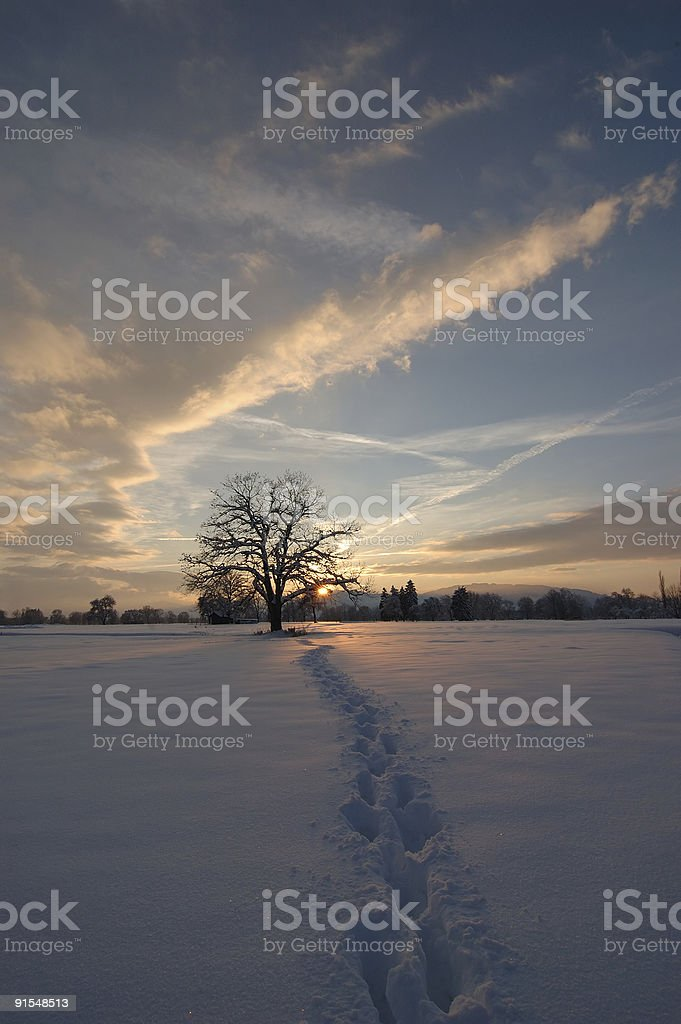 tree at winter-evening royalty-free stock photo