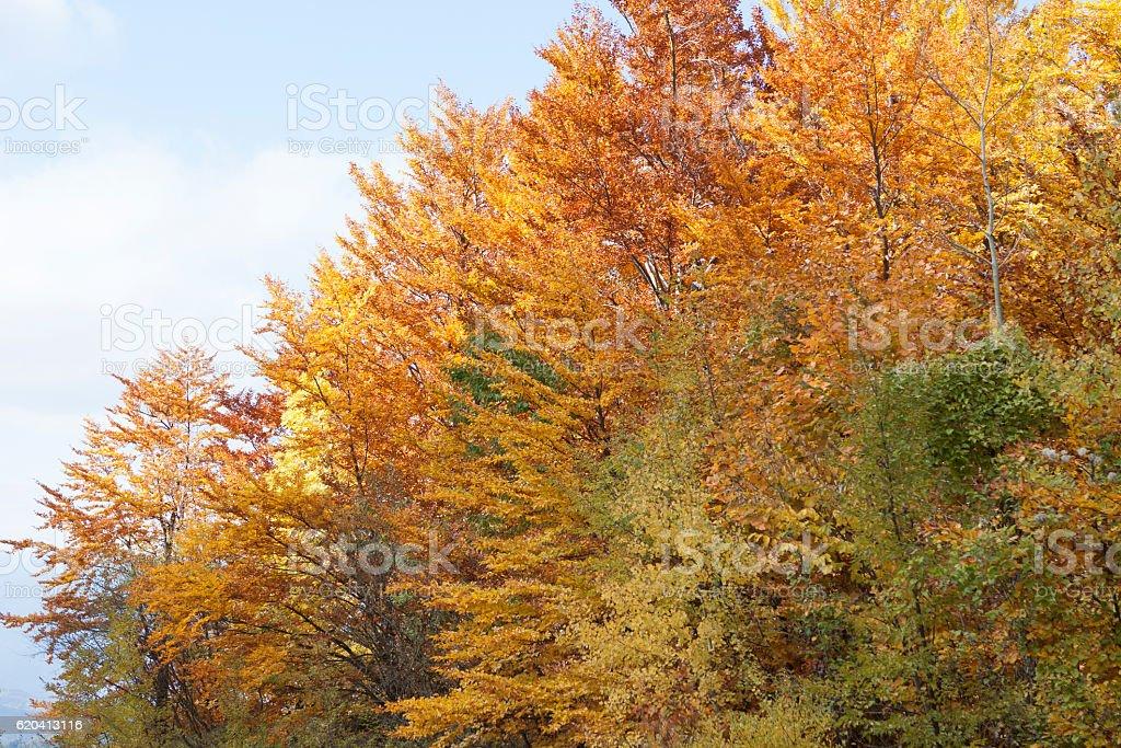Tree, autumn stock photo