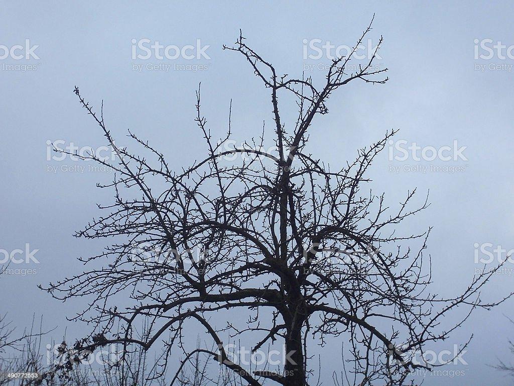 tree autumn winter cold slush dampness royalty-free stock photo