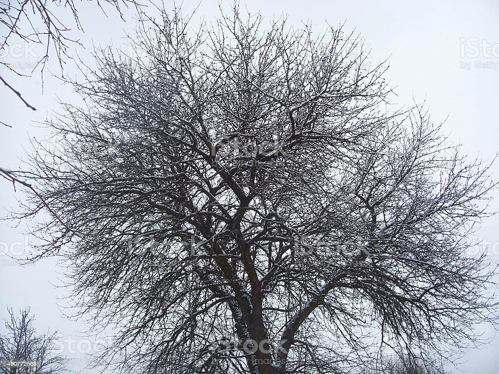 tree autumn winter cold slush dampness royalty-free stock photo