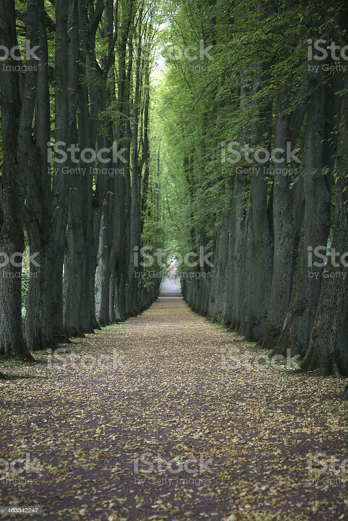 Tree avenue stock photo