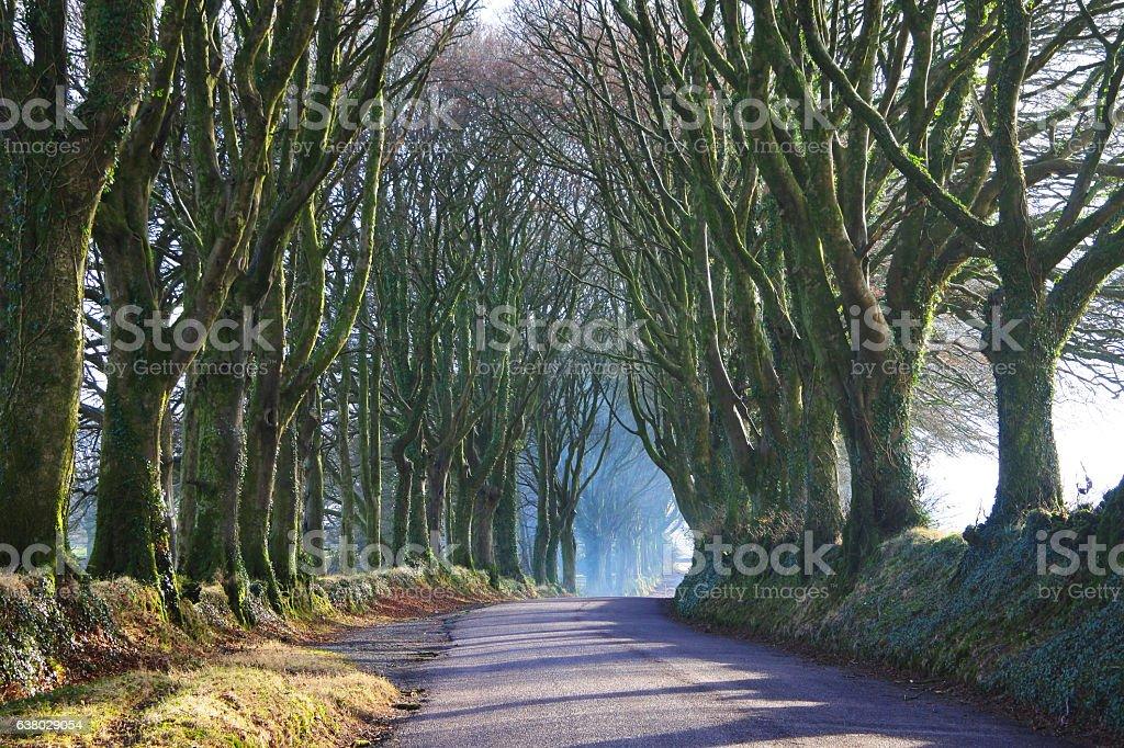 Tree Avenue stock photo