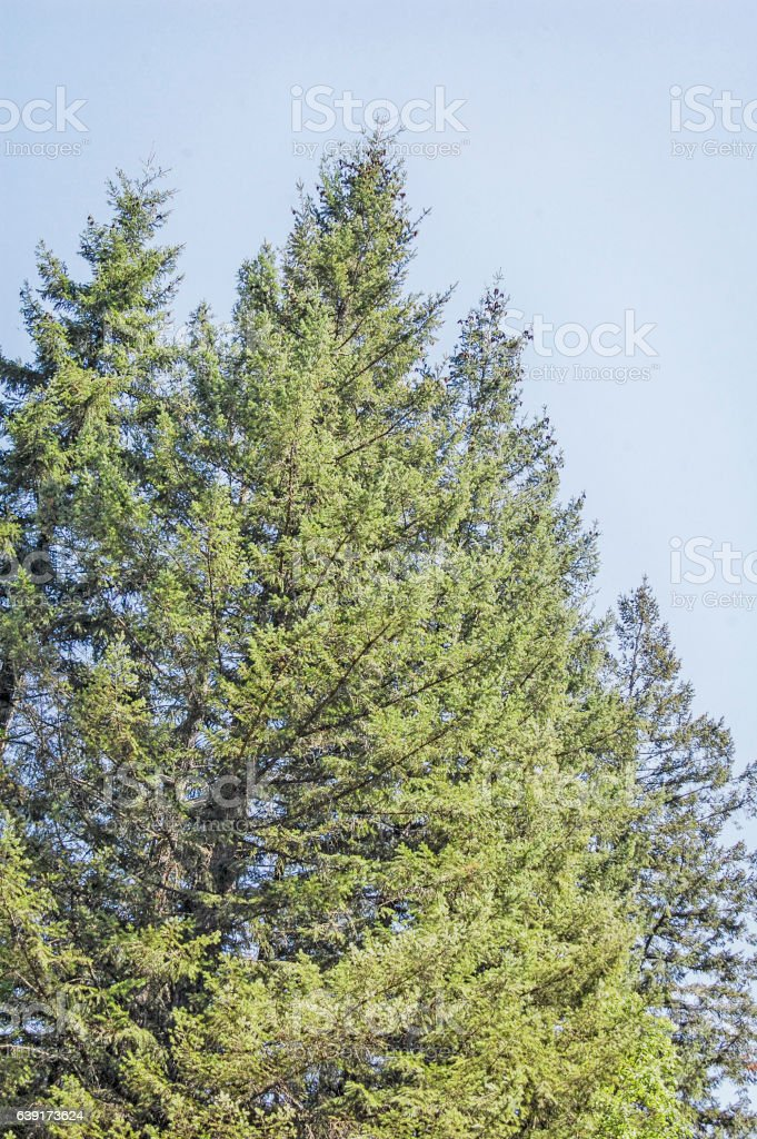 Tree - Background stock photo