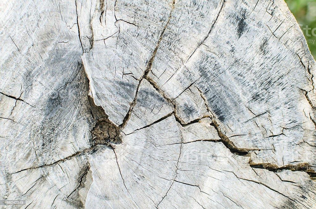 Tree background texture royalty-free stock photo