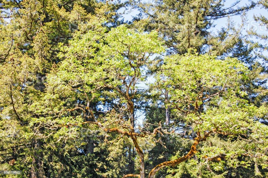 Tree - Backgrounds stock photo