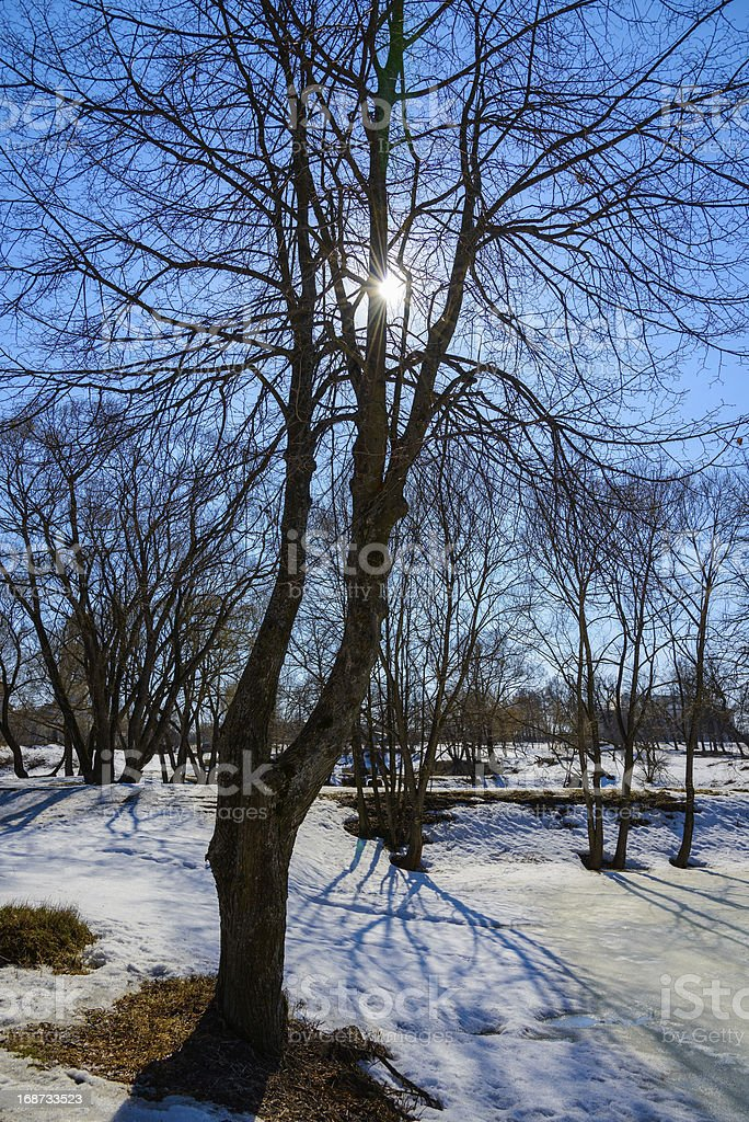 tree, backlit royalty-free stock photo