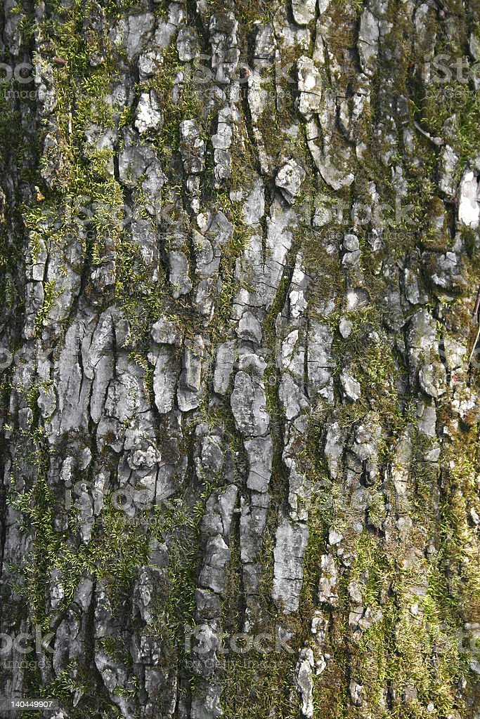 Tree Bark Background 3 royalty-free stock photo