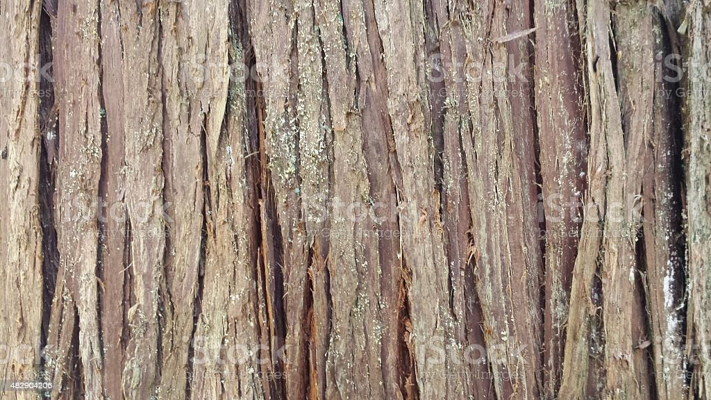 Tree bark closeup screensaver stock photo