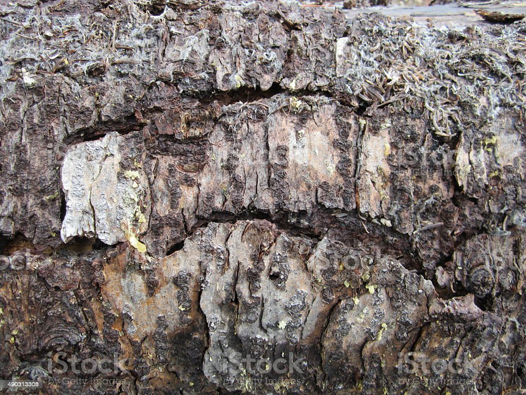 Tree bark closeu-up background stock photo