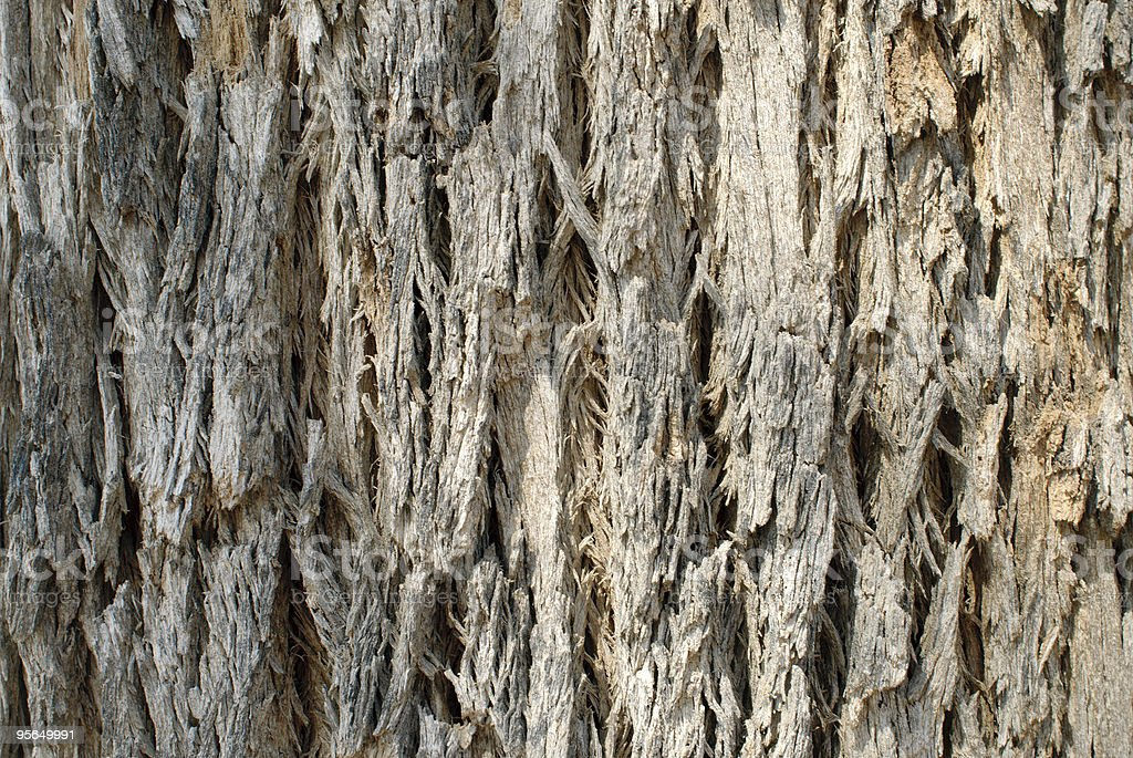 Tree Bark. Detailed. stock photo