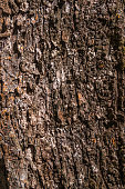 tree bark for background or texture