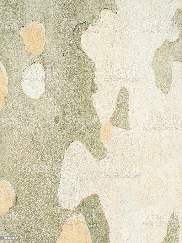 Tree Bark in Sunlight stock photo