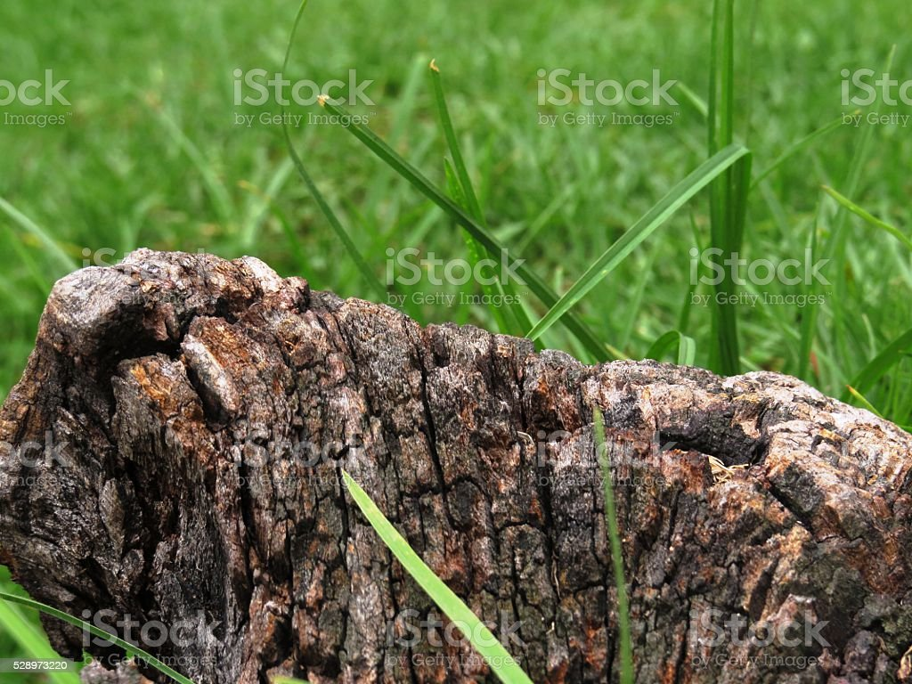 tree bark in the grass royalty-free stock photo