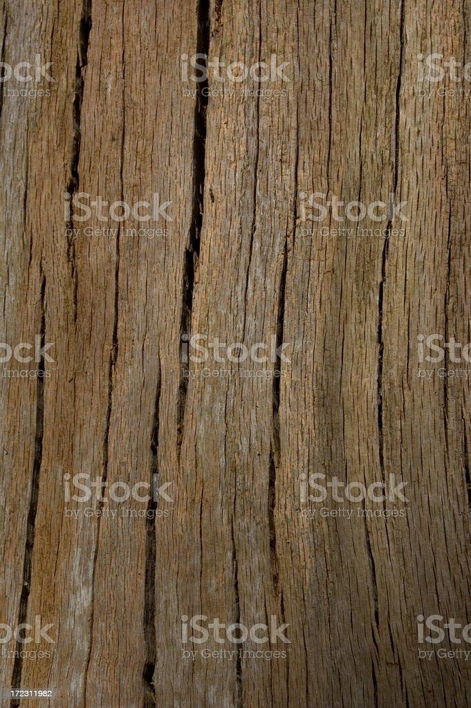 Tree Bark Lines royalty-free stock photo