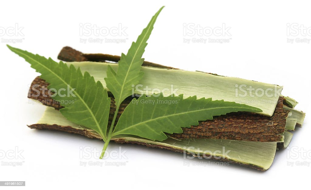 Tree bark of Medicinal Neem with leaves stock photo