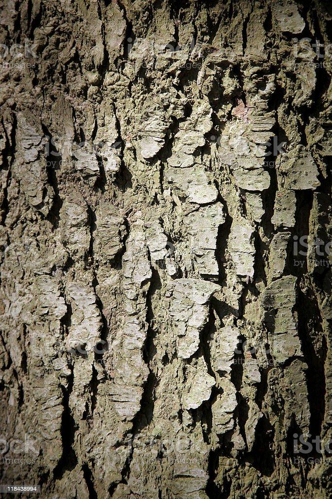Tree bark Стоковые фото Стоковая фотография