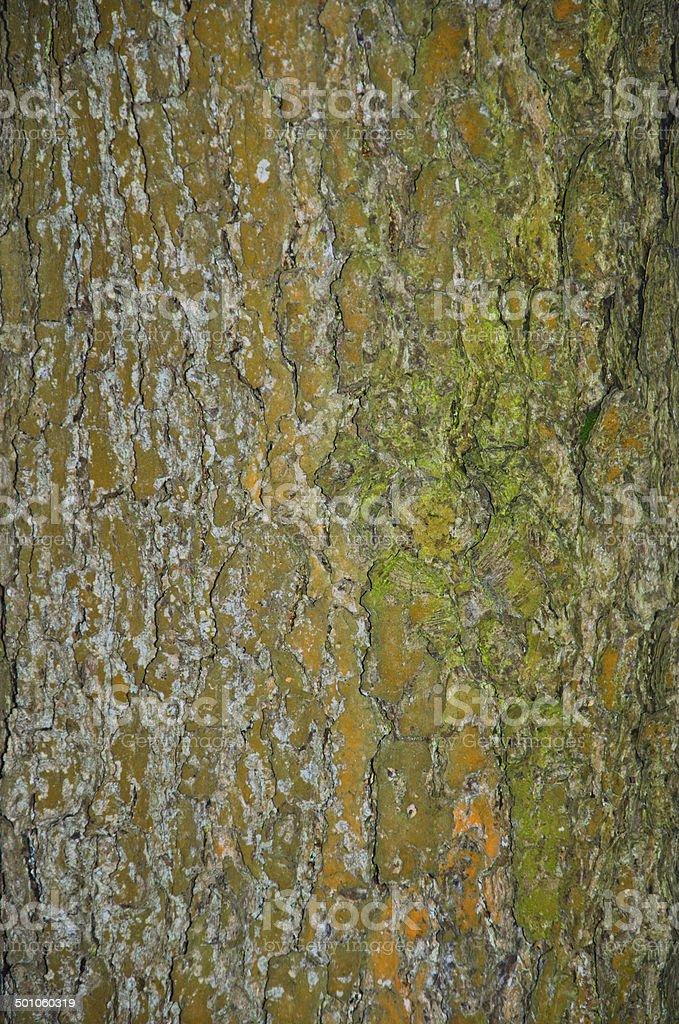 Casca de Árvore foto de stock royalty-free